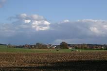 Felder und Pferdekoppel bei Frankenried