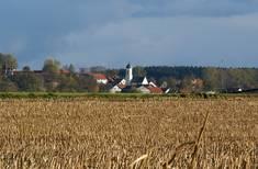 Abgeerntetes Feld bei Frankenried